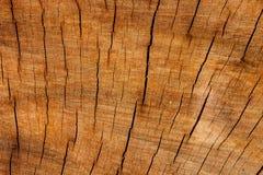 Old tree stump Stock Photos