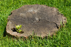 Old tree stump surrounded by grass Stock Photos