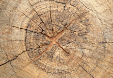 Old tree stump texture Stock Photography