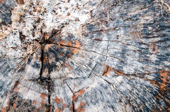Old tree stump texture Royalty Free Stock Photography
