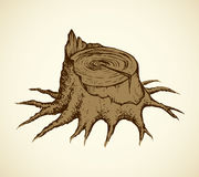 Old tree stump. Vector sketch. Destroyed stub of large powerful cut tree. Vector monochrome freehand ink drawn background sketching in scrawl style of pen on Royalty Free Stock Image