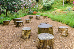 Old tree stumps Royalty Free Stock Photography