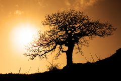 Old tree in sunset Royalty Free Stock Photography