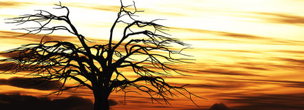 Old tree sunset background Stock Photos