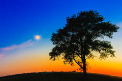 Old Tree In Sunset Royalty Free Stock Photos