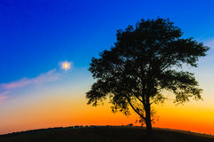 Old Tree In Sunset Royalty Free Stock Image