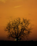 Old tree sunset silhouette Royalty Free Stock Photo