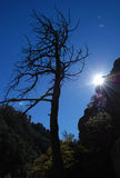 Old tree and sunshine in Chiricahua Mountains Stock Photos