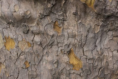 Old Tree Texture Royalty Free Stock Photography