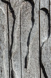Old tree. The texture of the bark beetle. Background. Wood pests. Tree bark. Cracks. Woodworm. Wood worms. Holes Gray tree Decorative Royalty Free Stock Images