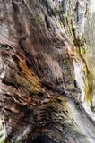 Old tree textures. Beautiful closeup of an old tree bark Stock Photos