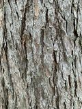 The old tree trunk background stock photo