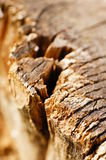 Old tree trunk Royalty Free Stock Images