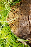Old tree trunk Stock Photo
