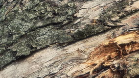 Old tree trunk close up. HD stock footage