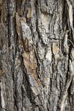 Old tree trunk Royalty Free Stock Photography