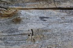 Old tree trunk with cracks. In the city stock image