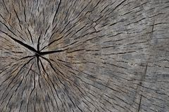 Old tree trunk with cracks. In the city park stock photo