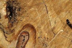Old tree trunk damaged Royalty Free Stock Photos