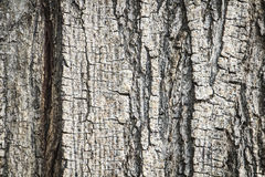 Old tree trunk detail texture as natural background Royalty Free Stock Image