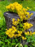 Old tree trunk flower pot stock image