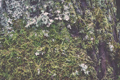Old tree trunk with green moss and bark - vintage retro Royalty Free Stock Photography