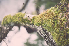 Old tree trunk with green moss and bark - vintage retro Stock Photo