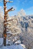 Old tree trunk i winter landscape Royalty Free Stock Photo