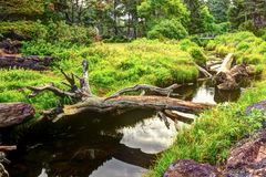 An old tree trunk lays across a small river with a bridge upstre Royalty Free Stock Image
