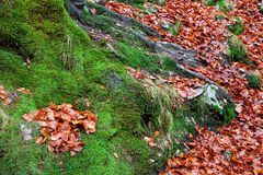 Old tree trunk with moss surrounded Royalty Free Stock Photos