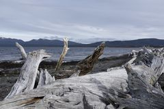 Free Old Tree Trunk On A Rocky Beach Royalty Free Stock Photos - 118741788