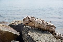 Old tree trunk on rocks by the sea Stock Photos
