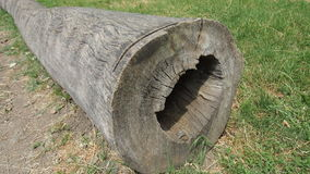 Old tree trunk. Old sawn wood for backgrounds Royalty Free Stock Photos