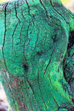 Old tree trunk stump colored paint. Abstract, backgrounds Royalty Free Stock Photos
