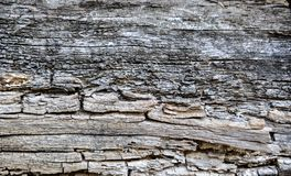 Old tree trunk Stock Photography