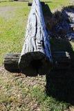 Old tree trunk Stock Photos