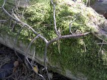 Old tree trunk under moss in the forest stock photography