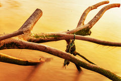 Old tree trunk in water Royalty Free Stock Images