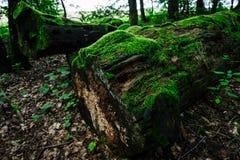 Old tree trunks Stock Photos