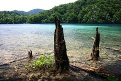 Old tree trunks protruding from the lake Royalty Free Stock Photos