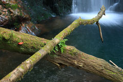 Old tree trunks and waterfall. Moss covered tree trunks over a pond, waterfall on background Stock Photos