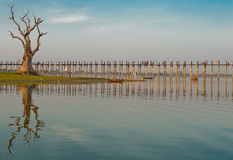 Old tree by ubein bridge. An old tree by taungthaman lake by The 1,5 km long ubein teak bridge in Amarapura, central Myanmar Royalty Free Stock Photo