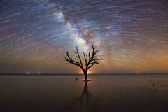 Old Tree under the night sky. This bare tree at Botany Bay Beach in South Carolina meets the ocean.  This is several hundred photos stacked together as the milky Royalty Free Stock Photo