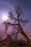 Leafless tree in Grand County, Utah near Rocky Rapids Stock Photo