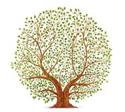 Old tree vector. Illustration on white background Stock Photography