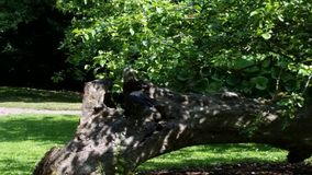 Old tree in Visby Botanical Garden Stock Images