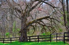Old tree Royalty Free Stock Photos