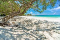 Old tree on the white beach, Samed island, Thailand. Asia royalty free stock photo
