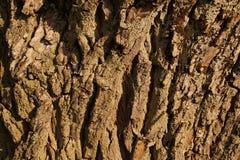 Close-up of a tree bark. Old tree: willow salix alba. Old tree: willow salix alba. Close-up of a tree bark royalty free stock photos