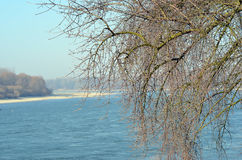 Old tree in the winter and Danube river Stock Images